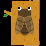 蝉の鳴き声