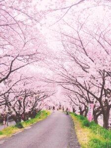 【桜満開】 「まん防中」久々の花見